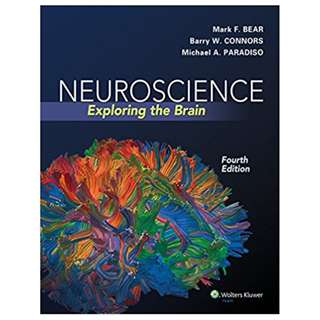 Neuroscience: Exploring the Brain 4th Edition by Mark F. Bear (Author), Barry W. Connors (Author), Michael A. Paradiso (Author)