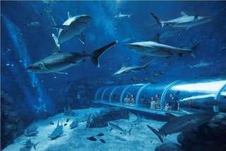 Sea Aquarium ❤️