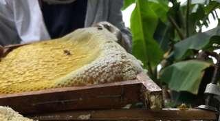 🐝天然蜂蜜🐝