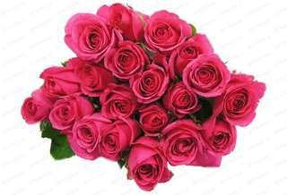 20 stalks shocking pink roses bouquet