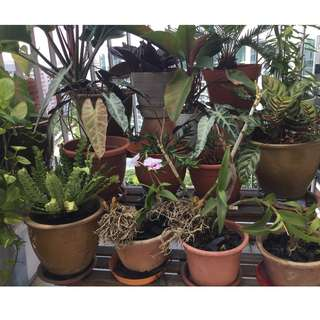 Plants for sale - various prices and sizes - all very healthy - indoor/outdoor