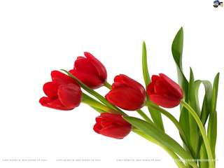 10 stalks red tulip bouquet