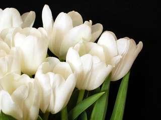 10 stalks tulip bouquet