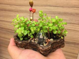 Mini secret garden~Japanese Rare Makinoi
