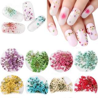 🚚 Set of 12 colours dried flower for diy manicure Nail Art decoration