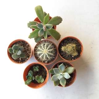 Succulents & Cacti Bundle Sale