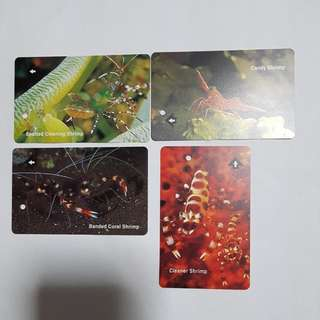 MRT Cards - Shrimp