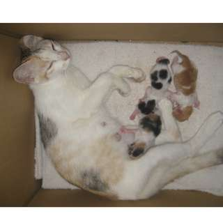3 NEW BORN KITTIES & A MOTHER FREELY TO ADOPT