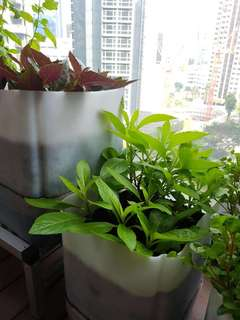 Self Irrigating Grow Your Own Vegetables Pots
