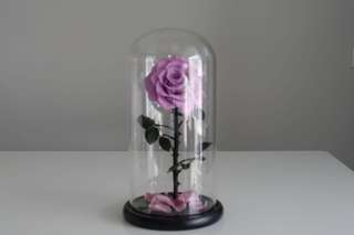 FREE Delivery - Premium Preserved Big Ecuadorian Roses in Glass Dome