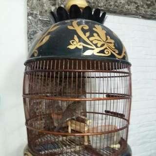 Dome Cage