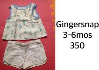 Gingersnap Terno