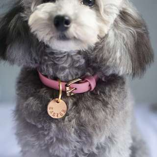 🚚 Collars for pets - DOGS AND CATS!
