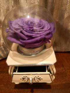 Music box preserved rose