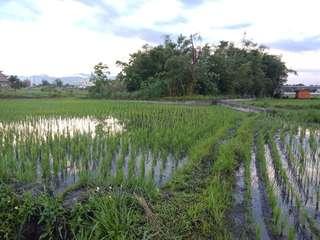 🚚 自然農法白米