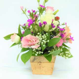 All Occasions - Flowers in a Pot