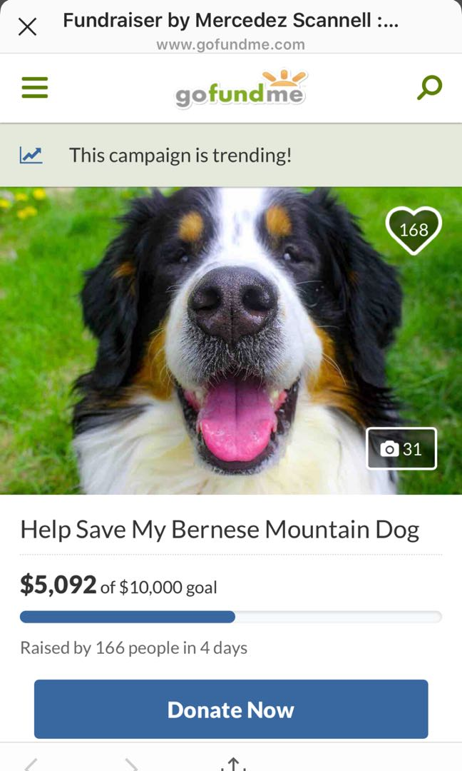 PLEASE PLEASE help save my puppy