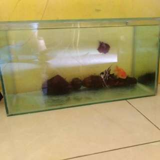 Aquarium Ikan UK. 40cm