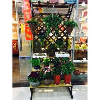 Carbonized Cedar-Wood Plants Stand - 90cm x 200cm (3 Tiers) Wooden Colour