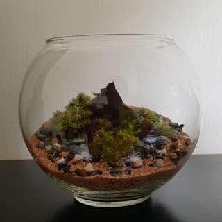 RARE! Moss Scape Terrarium