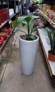 5 tall pots of indoor plants