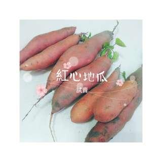 【超取下標處】紅心地瓜🌲自家農場販售