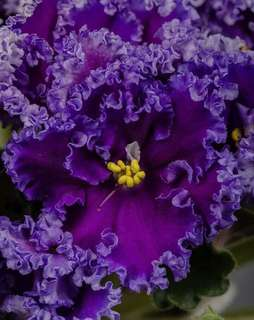 Flower reading to manifest your desires