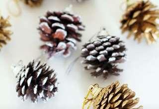 Pine cones 5cm