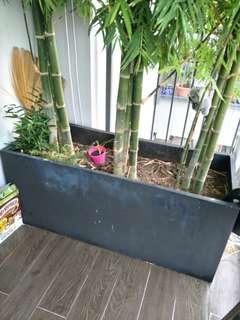 Flower pot planter box for plants