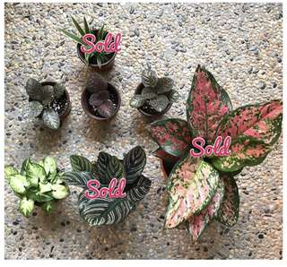 Potted Plants - Various