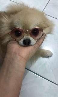 Kacamata anjing atau kucing