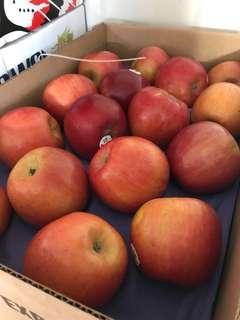 美國華盛頓富士蘋果一箱12顆含運600一顆300克