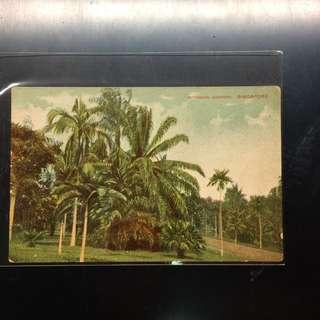 Vintage Singapore Botanic Gardens postcard