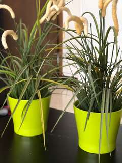 Ikea green plant pots with 2 plastic plants