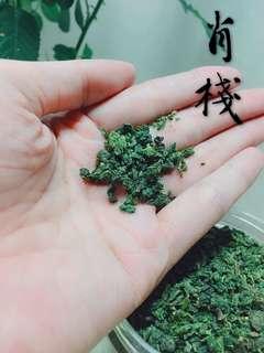 降三高神仙茶 - 桑葉