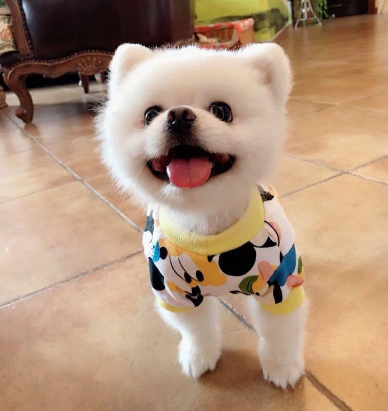 (PO) Pets Dog T Shirt Disney Goofy Designs