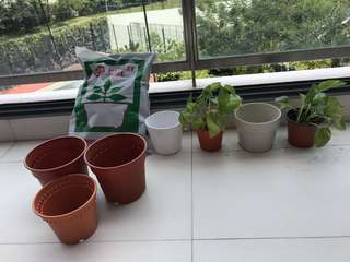 Ikea Plants, Pots and Gardening Soil