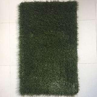 Carpet Grass
