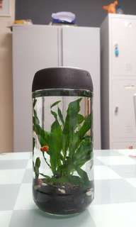 aquarium bottle nescafe fish tank