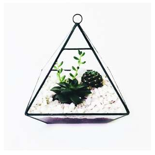 Geometric Low Triangle Pyramid Terrarium