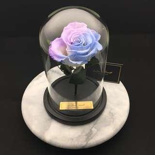 品牌:Le Fiori Secert 外國巨型玫瑰保鮮花(紫藍色限量版)