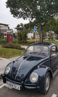 Volkswagen VW beetle