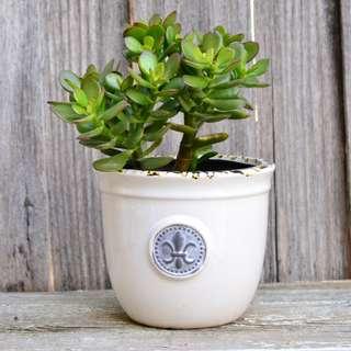 White Provincial Ceramic Planter