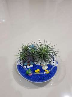 Airplant Terrarium For Gift!