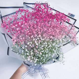 Pink Ombre Baby's breath