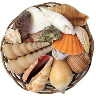 Assorted Shell Pack - 150 Grams