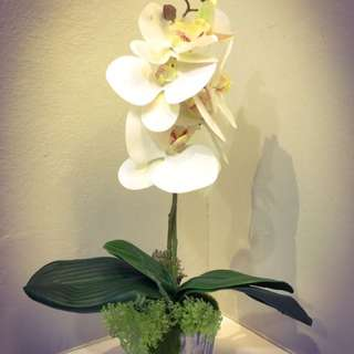 Handmade Decorative Orchid for home & office