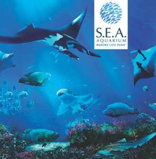 SEA Aquarium Child Ticket