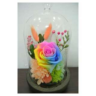 Preserved flowers Rainbow colors