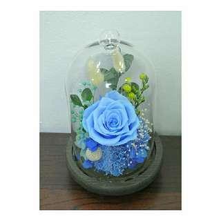 Preserved flowers Sky blue color
